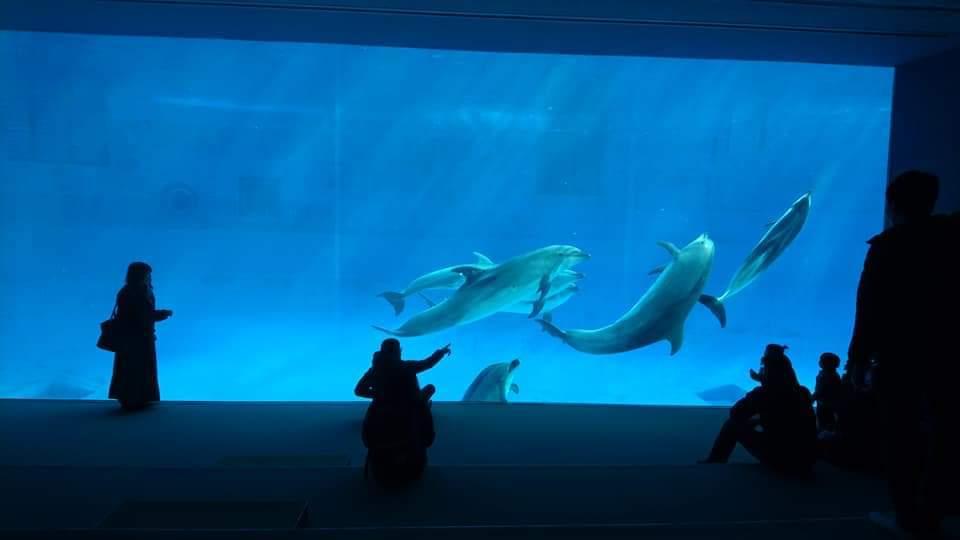 名古屋港水族館にポスター掲示中です!_f0373339_15542302.jpg