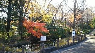 東京大仏・赤塚植物園そしてひびき庵でお蕎麦_b0080342_21075653.jpg