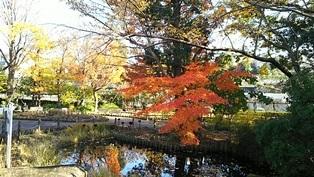 東京大仏・赤塚植物園そしてひびき庵でお蕎麦_b0080342_21082094.jpg
