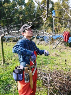 熊本梨 本藤果樹園 令和2年度の梨作りスタート!匠の選定作業が始まりました!(前編)_a0254656_16402373.jpg