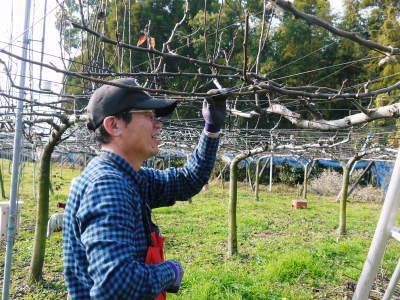 熊本梨 本藤果樹園 令和2年度の梨作りスタート!匠の選定作業が始まりました!(前編)_a0254656_17063952.jpg