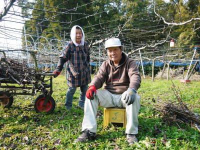 熊本梨 本藤果樹園 令和2年度の梨作りスタート!匠の選定作業が始まりました!(前編)_a0254656_17205899.jpg