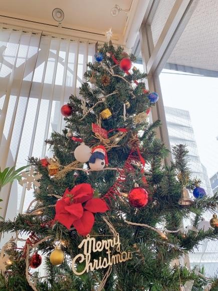 クリスマスの飾りつけをしました_a0211066_10352093.jpg