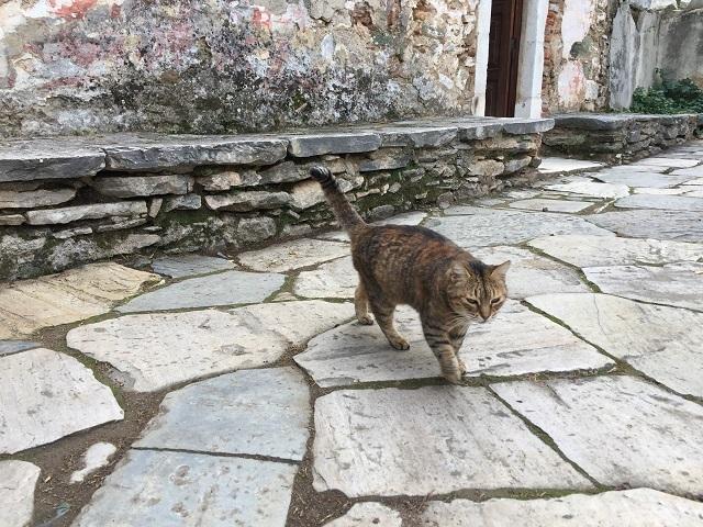 廃墟のハンサム猫_a0123372_21495201.jpg