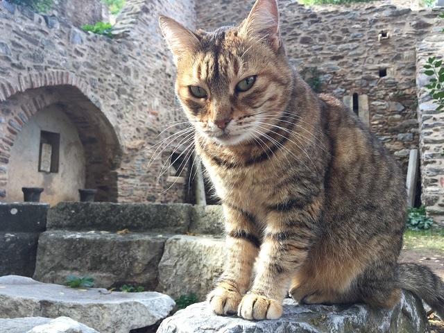 廃墟のハンサム猫_a0123372_21563575.jpg