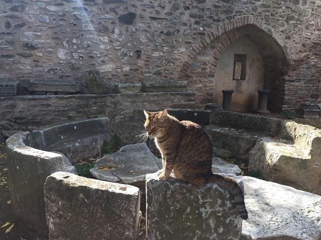 廃墟のハンサム猫_a0123372_22003975.jpg