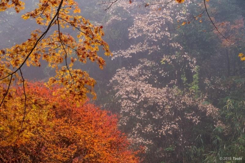 雨の鳥見山 2_c0350572_22024526.jpg
