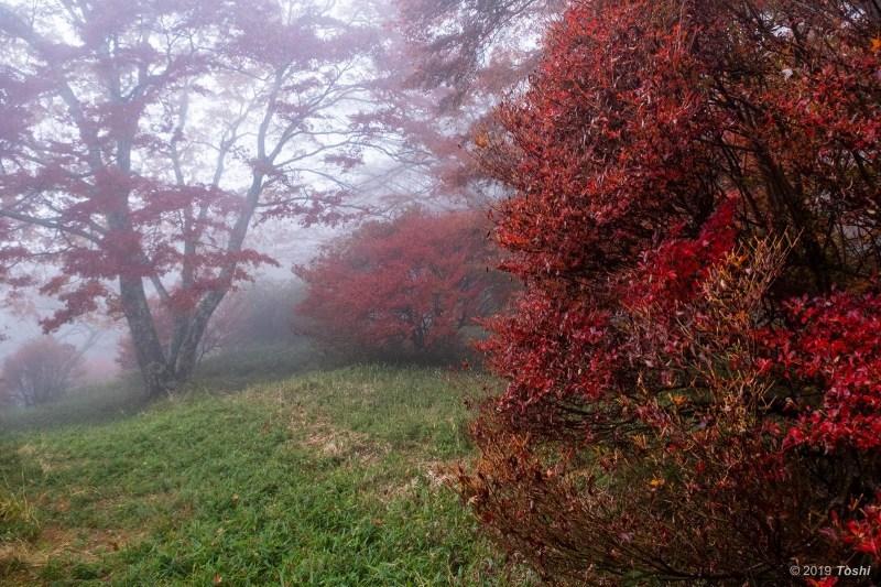 雨の鳥見山 2_c0350572_22031006.jpg