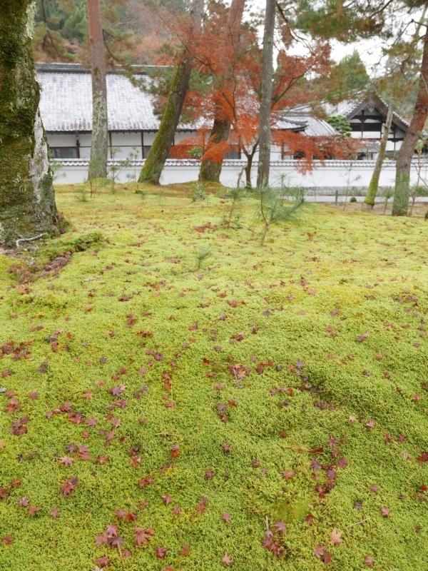 冬の京都_c0366777_23090102.jpeg