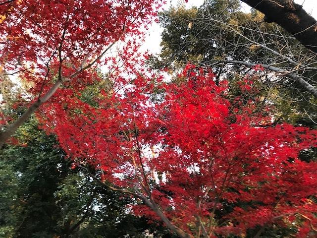 花より赤く_b0129897_12011877.jpg