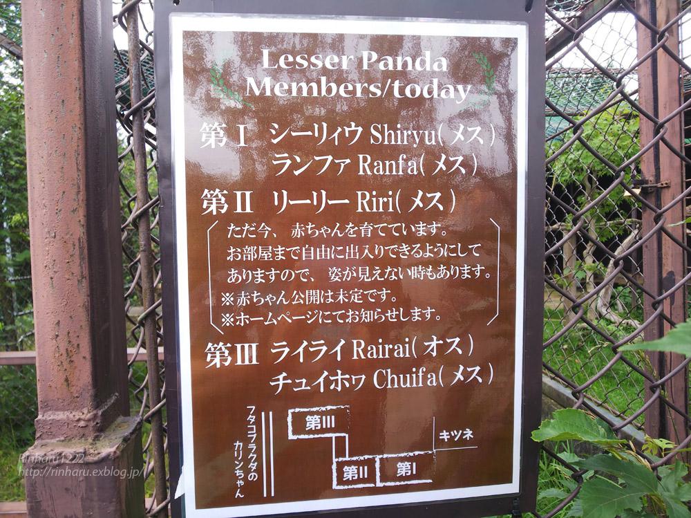 2019.7.13 東北サファリパーク☆レッサーパンダのシーリィウとランファ<前編>【 Lesser panda】_f0250322_20373733.jpg