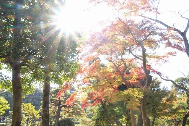 伊勢神宮内宮参詣(その2)(撮影:12月1日)_e0321325_13382404.jpg