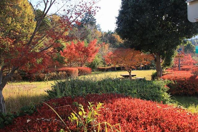 多気PAの紅葉(撮影:12月1日)_e0321325_14462736.jpg