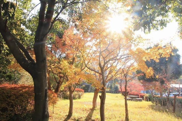 多気PAの紅葉(撮影:12月1日)_e0321325_14464750.jpg