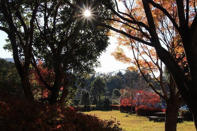 多気PAの紅葉(撮影:12月1日)_e0321325_14470686.jpg