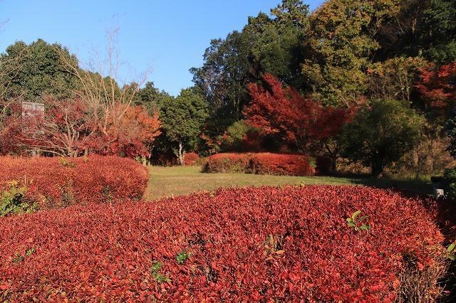 多気PAの紅葉(撮影:12月1日)_e0321325_14482422.jpg