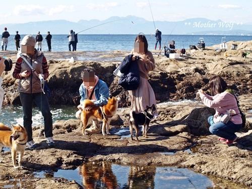 第26回マザーウルフ遠足 江ノ島レポート_e0191026_15430551.jpg