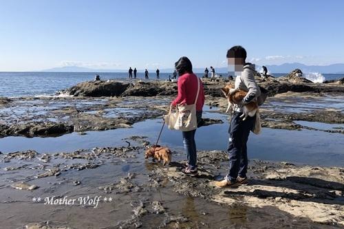 第26回マザーウルフ遠足 江ノ島レポート_e0191026_15502802.jpg