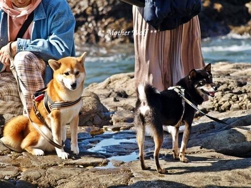 第26回マザーウルフ遠足 江ノ島レポート_e0191026_16122110.jpg