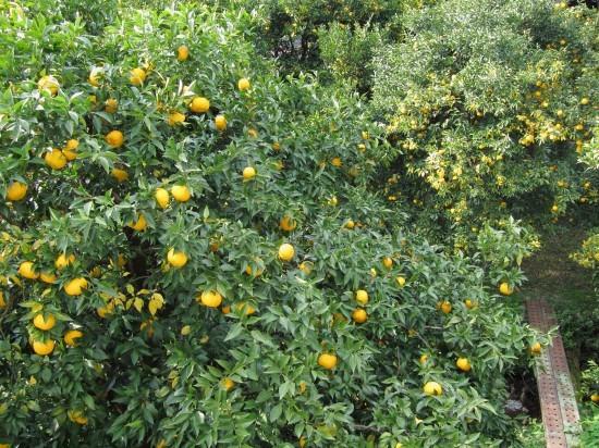 柚子酵母が出来上がる_d0336530_19591874.jpg