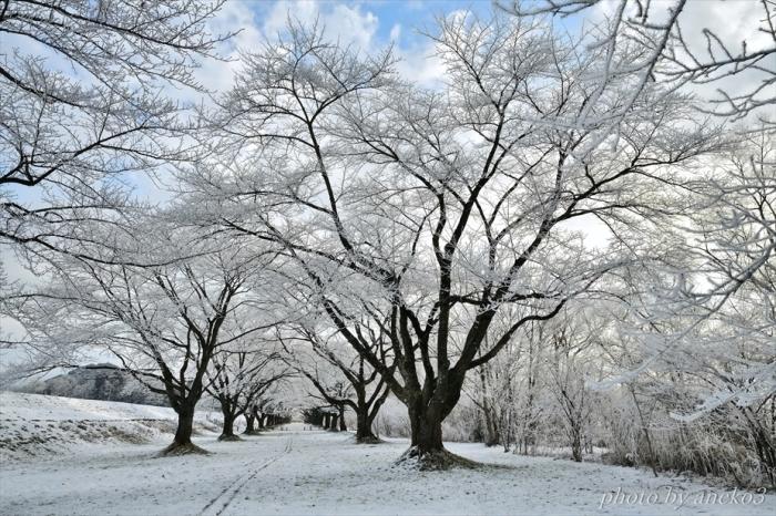 みちのく寒い朝_d0067934_17173763.jpg