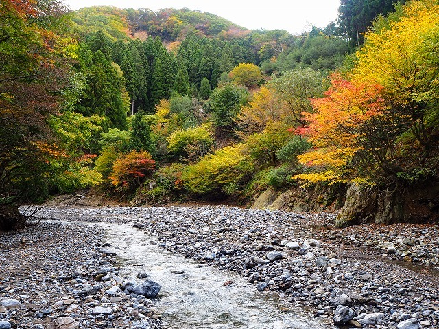 2019/11/4【鈴鹿】茨川から御池 ~ 廃村から川を歩いて亀尾を登る ~_e0403837_16171252.jpg