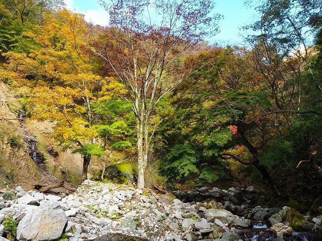 2019/11/4【鈴鹿】茨川から御池 ~ 廃村から川を歩いて亀尾を登る ~_e0403837_16174931.jpg