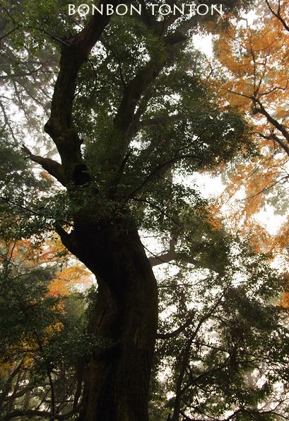 Dark  Forest ちょっと紅葉_b0130243_21000820.jpg