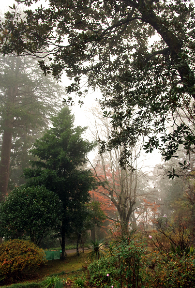 Dark  Forest ちょっと紅葉_b0130243_21085832.jpg