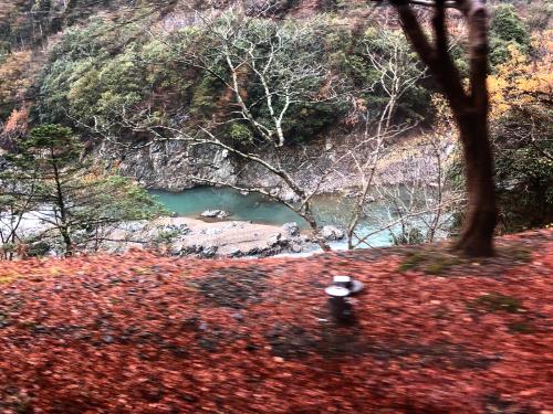 嵐山トロッコ列車_e0292546_03403137.jpg