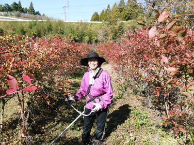フレッシュブルーベリー 紅葉と冬の剪定開始!おしどり夫婦が元気に頑張っています(前編)_a0254656_18272209.jpg