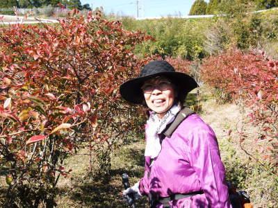 フレッシュブルーベリー 紅葉と冬の剪定開始!おしどり夫婦が元気に頑張っています(前編)_a0254656_18295449.jpg