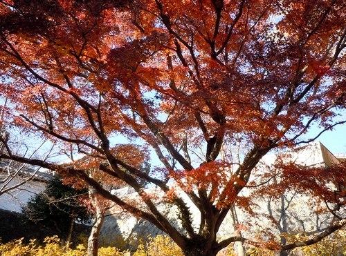 路傍の花、樹々の鳥(360) ~ 千年の社の椿 ~_b0102572_10264955.jpg