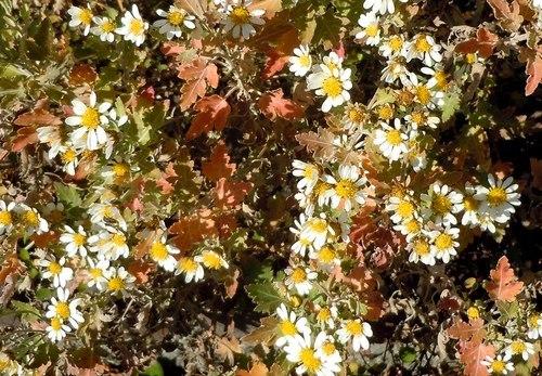 路傍の花、樹々の鳥(360) ~ 千年の社の椿 ~_b0102572_10272127.jpg