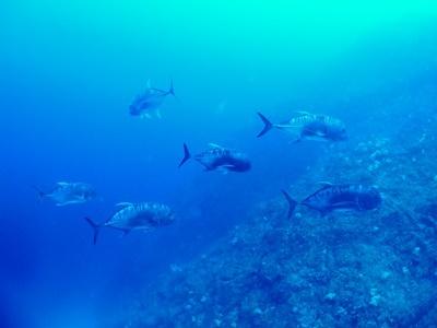 「太平洋側のポイント調査」_b0033573_19544665.jpg