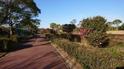 富浜緑地にて、サザンカの花が咲いています♫_d0338682_14421477.jpg