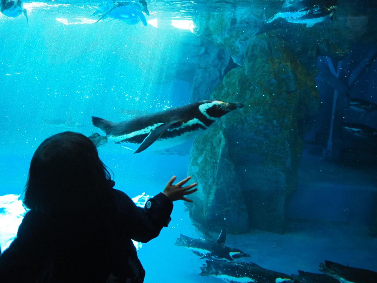 ペンギン_f0370091_00182531.jpg