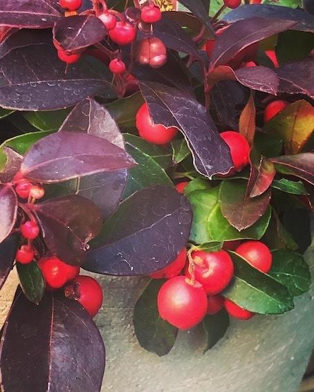 木の実に魅せられる季節_f0061394_10402698.jpg