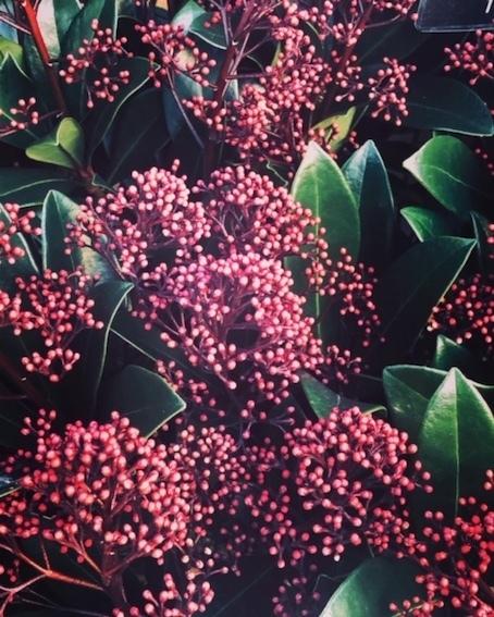 木の実に魅せられる季節_f0061394_10412297.jpg