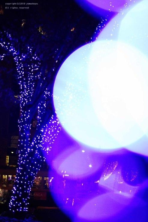イルミネーションの光の中で_d0309612_23374966.jpg