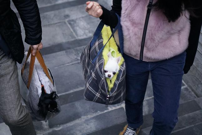 ☆ Louis dog ・ New Winter Bag ☆_d0060413_10374824.jpg