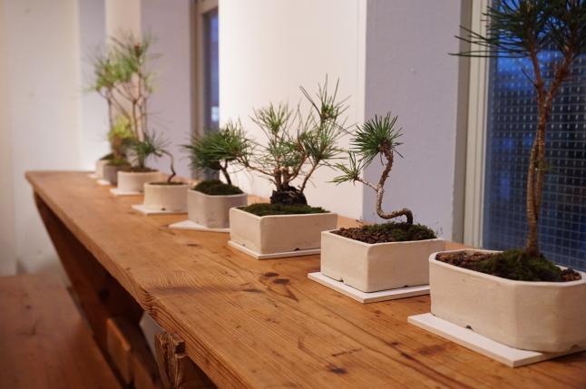 お正月飾り 松の盆栽ワークショップ 〜榊麻美植物研究所〜_d0348118_19132902.jpeg