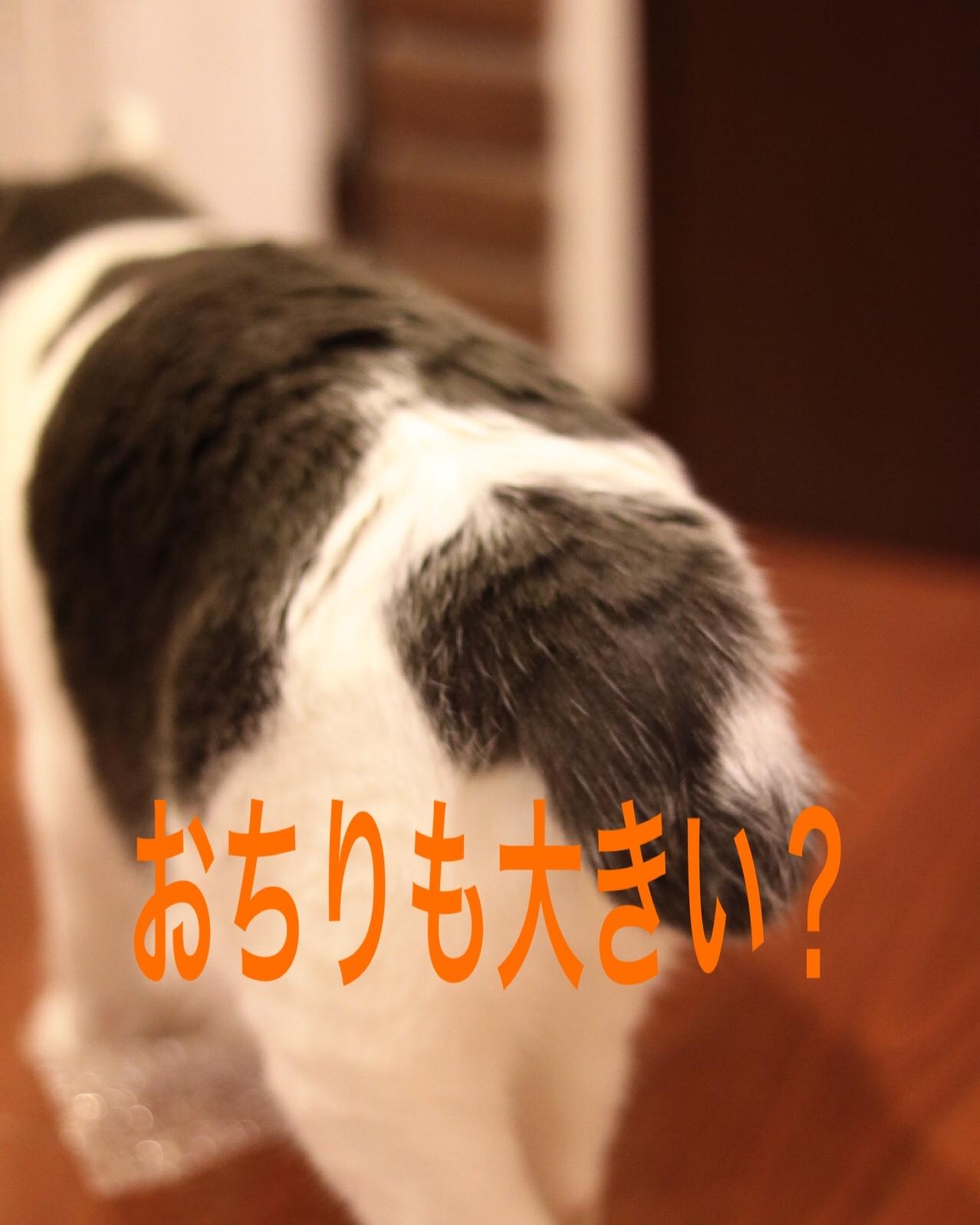 にゃんこ劇場「ふくちゃん、牛を食う?」_c0366722_17301430.jpeg