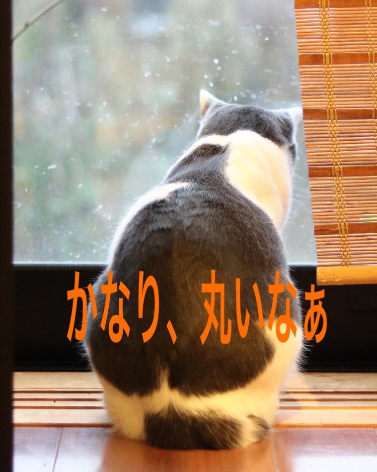 にゃんこ劇場「ふくちゃん、牛を食う?」_c0366722_17303389.jpeg