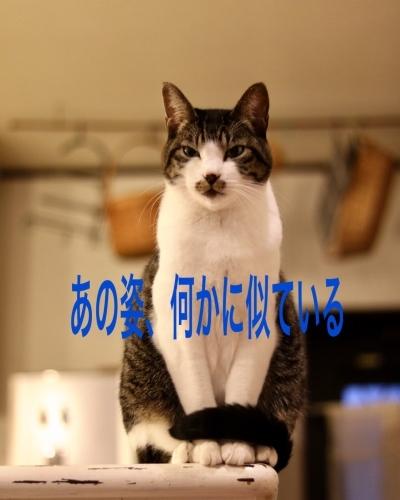 にゃんこ劇場「ふくちゃん、牛を食う?」_c0366722_17304995.jpeg