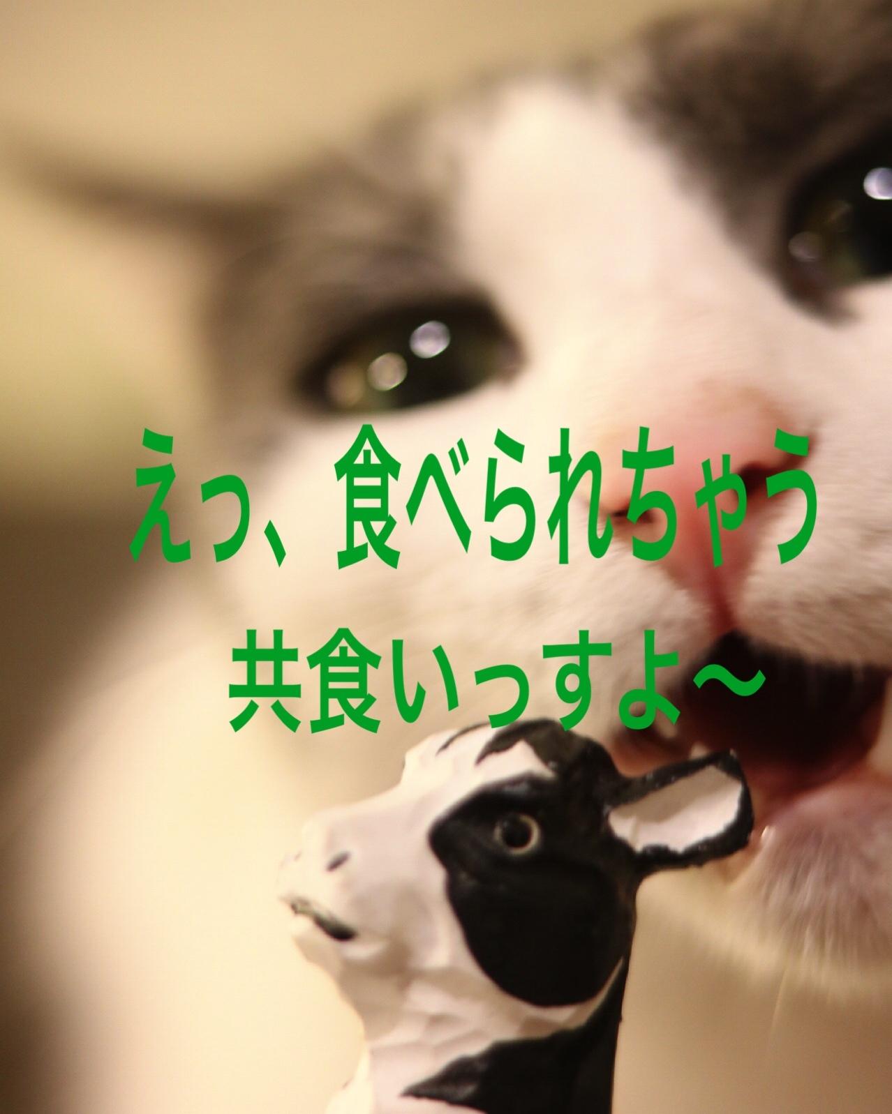 にゃんこ劇場「ふくちゃん、牛を食う?」_c0366722_17313305.jpeg