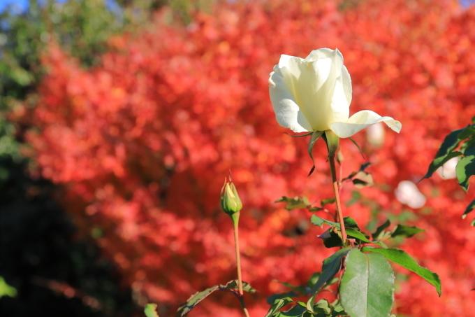 【鳩山会館】文京区レトロ建物探訪 part 3_f0348831_08172867.jpg