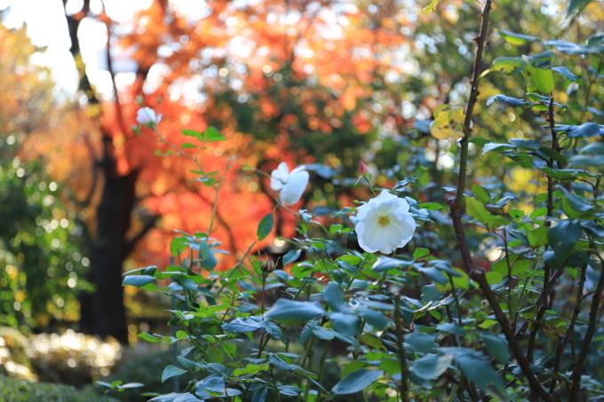 【鳩山会館】文京区レトロ建物探訪 part 3_f0348831_08173780.jpg