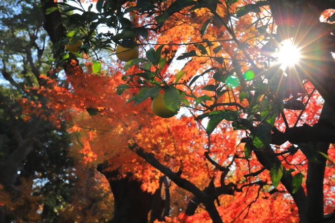【鳩山会館】文京区レトロ建物探訪 part 3_f0348831_08173805.jpg