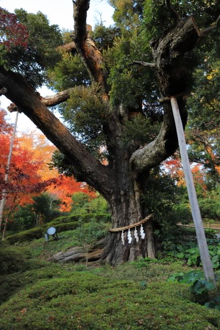 【椿山荘】文京区レトロ建物探訪 part 5_f0348831_08185461.jpg